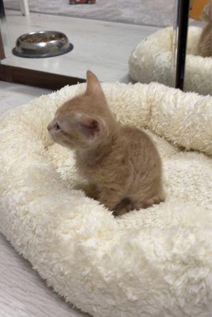 Лежанка для котят