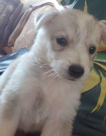 Супер пупер щенок!!!