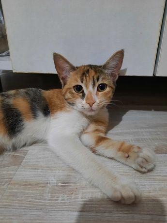 Красивая Кошечка девочка