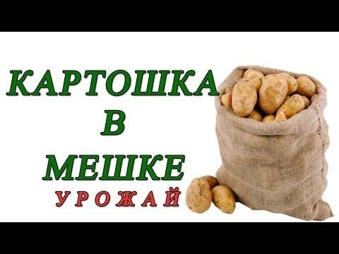 Картошка мешок за 8 тыс