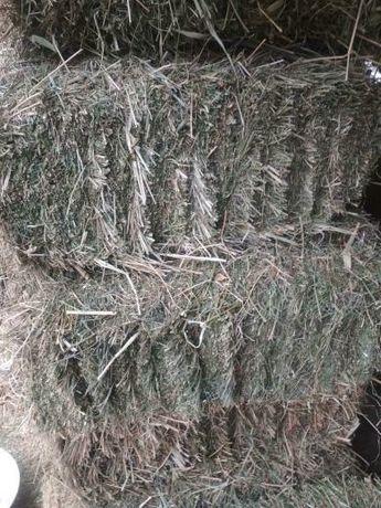 Продам зелёные  тюки люцерна