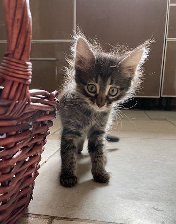 Девочки котята в добрые руки