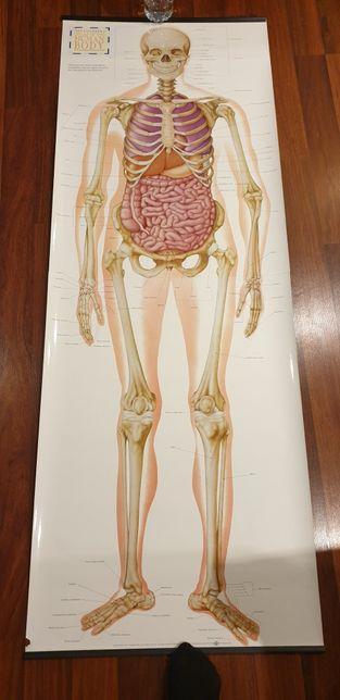 Mapa corpului uman 175 cm mapa