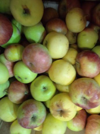 Яблоки домашние дачные