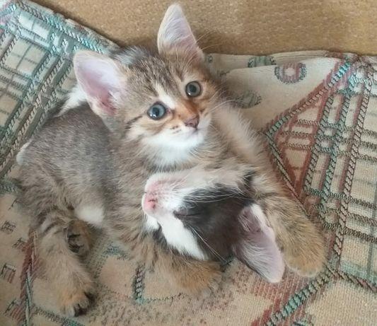 Прекрасные котята в ответственные руки.