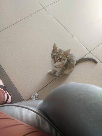 Найден котёнок! Спешите помочь!!!