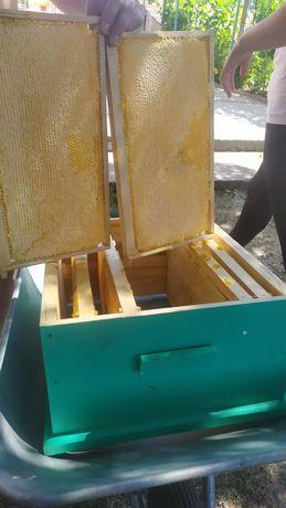 Продавам домашен натурален пчелен мед