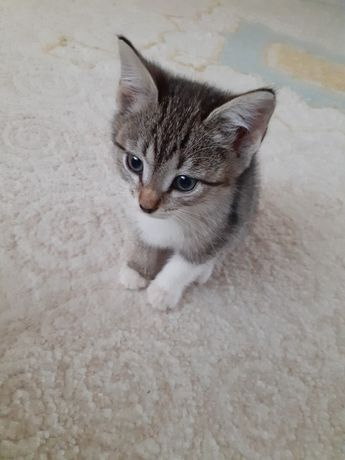 Котенок ждет своего хозяйна