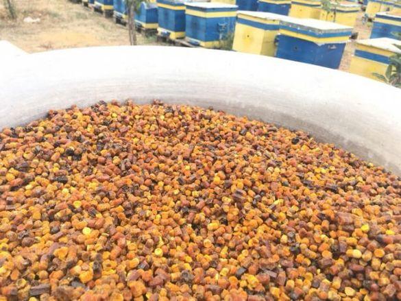 Перга, Пчелен Хляб 1 кг екологична (натурален имуностимулатор)