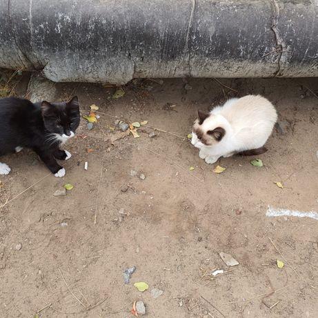 СРОЧНО!!! Две молоденькие кошечки!