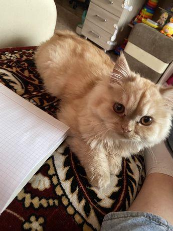 Котик в добрые руки. Может кто то потерял?