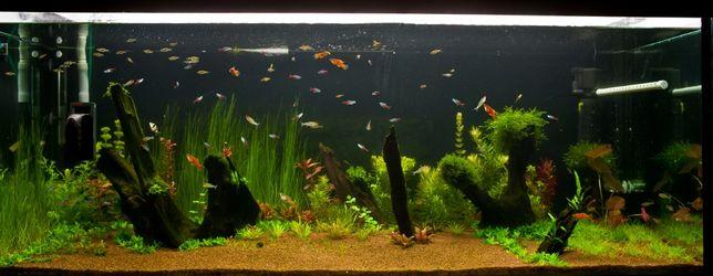 plante, pesti, mancare, intretineri si amenajari acvarii