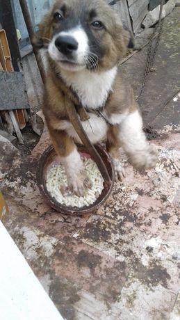 Собачка даром в хорошие руки