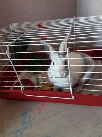 Продам срочно декоративного кролика