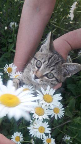 В хорошие руки  котятки
