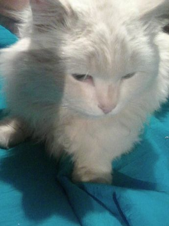 Двор Сатпаева -Кошукова! Помогите найти котика !