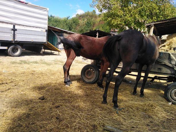 Vând cal și carlana calu are 5 ani și carlana 2ani mai multe d