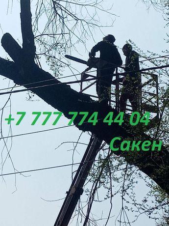 Спил/распил деревьев в Алматы