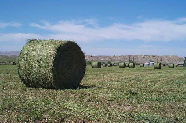 Продаём сено(грубые корма: разнотравие, житняк, суданская трава).