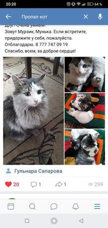 Пропал кот Мурзик 20 июня 2019 г в районе КЭУ.