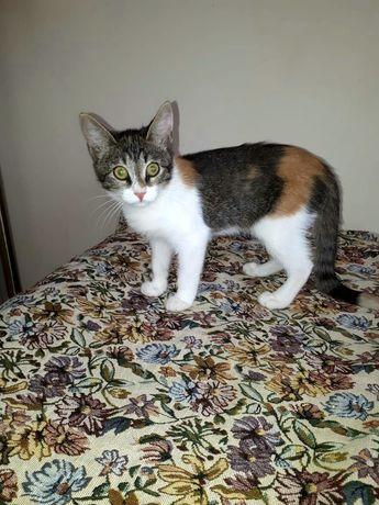Отдам в добрые руки котёнка 3-4 месяца привитая, приученная, ласковая