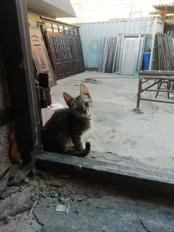 Мышык кошка