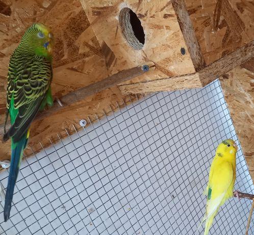 Продам попугай .