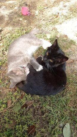 Отдам котят. Коты. 4 месяца