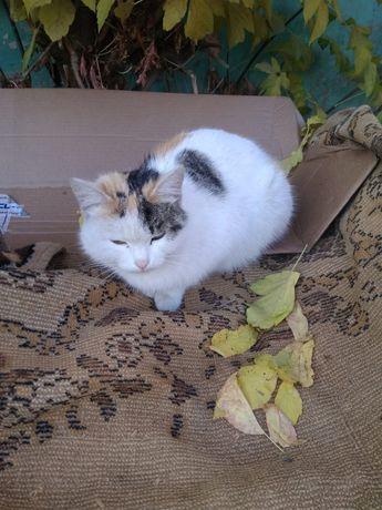 Молодой кошечке с двумя котятами срочно нужен дом или передержка