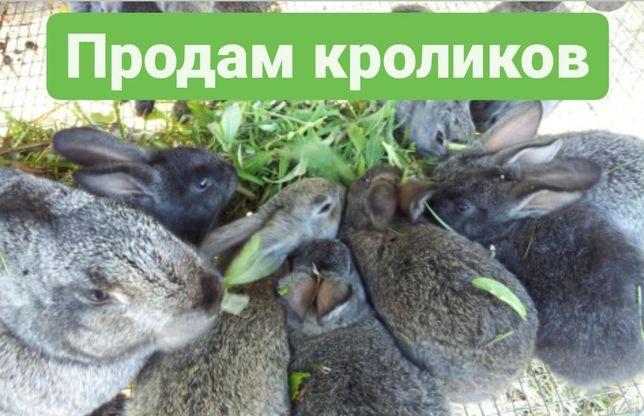 Продам кроликов)