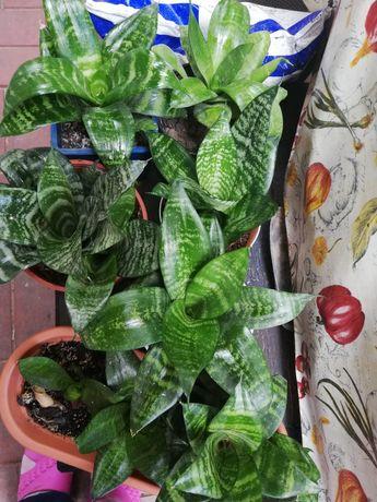 Diverse plante in ghiveci
