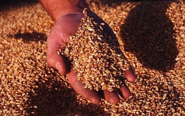 Пшеница, ячмень, просо, мука кормовая!