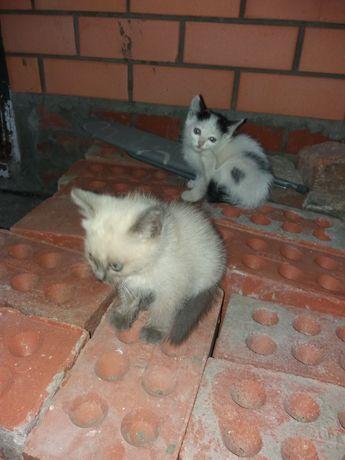 Котята,  умные, приученные к туалету, кушают все