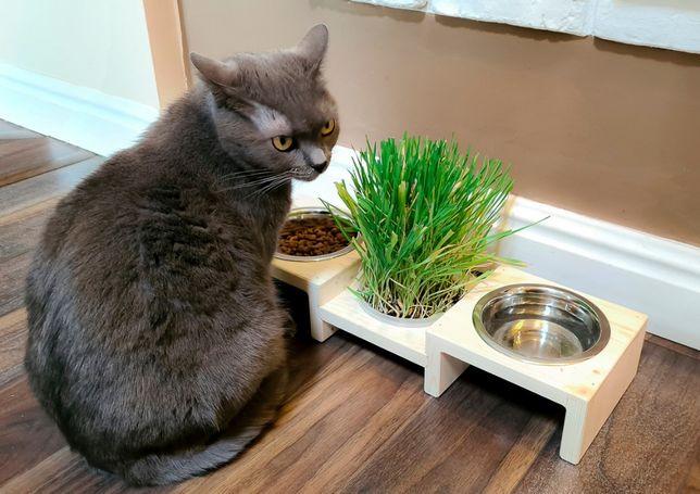 Suport cu castron si iarba pisicii