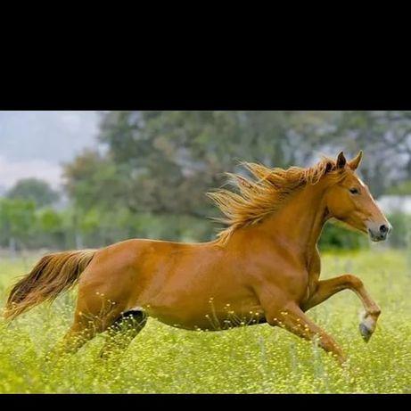 Тай,конь