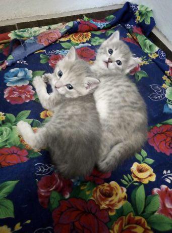 Красивые котята хорошим хозяевам
