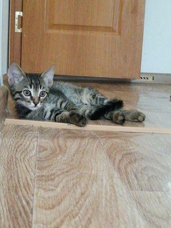 Котёнок, 2 месяца.