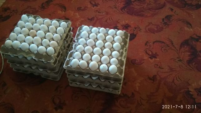 Продам яйцо инкубационные бройлера кобб 500