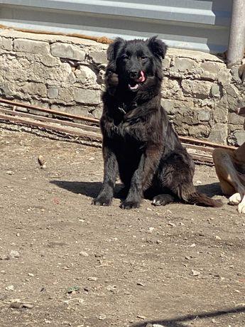 Стерилизованая собака ищет дом