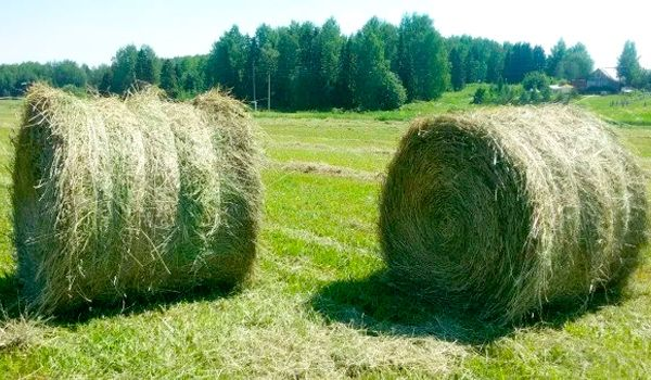 Зеленое сено в рулонах.Максимальной плотности