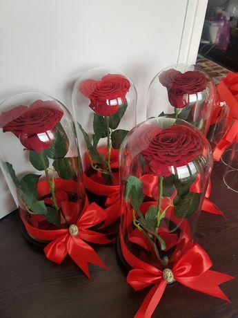 Trandafiri criogenati pt valentine's