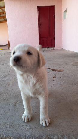 Продам щенка, один месяц