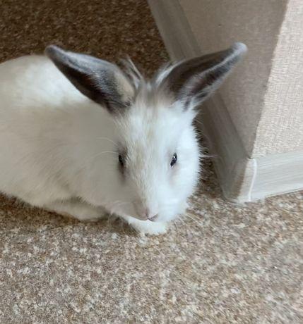 Продам кролика!