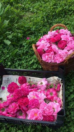 Dulceata si sirop de trandafiri