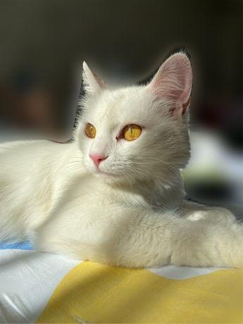 Стерилизованная кошка ищет семью Сама привезу