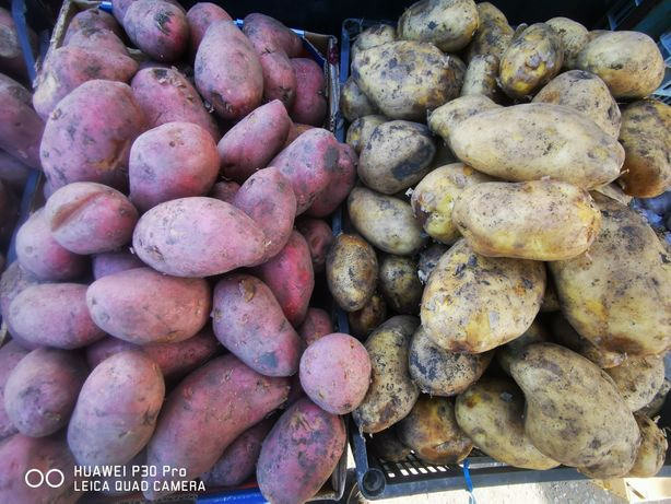 картофель зимний на хранение