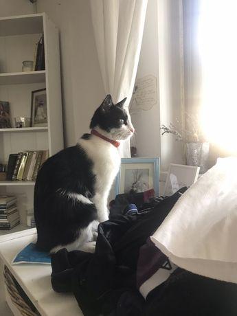 donez pisica care prinde soareci