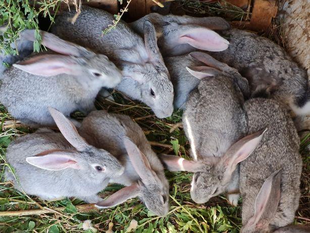 Кролики домашние,возраст разный