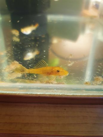 Аквариум ные рыбки