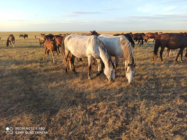 Обменяю лошадей на  Ниву